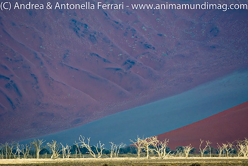 AnimaMundiMagazine posted a photo:	Sand dunes, Namib-Naukluft National Park, Sossusvlei, Namibia