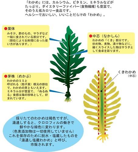 わかめの図 by 日本わかめ協会