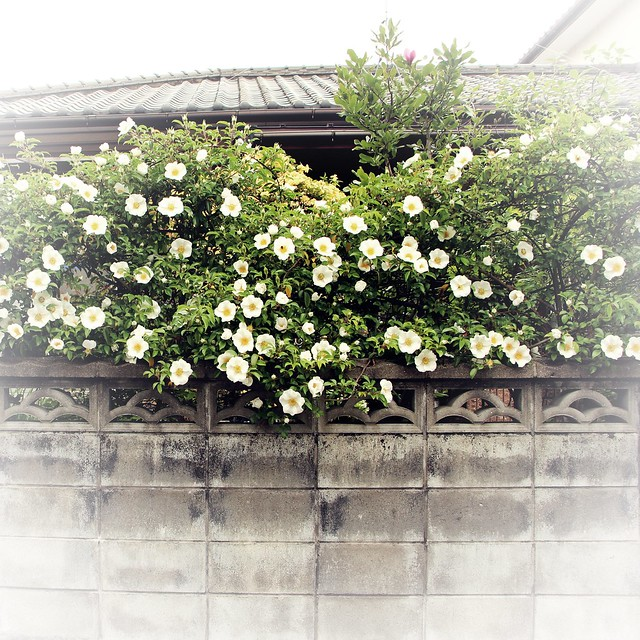 Walk along Nakagawa