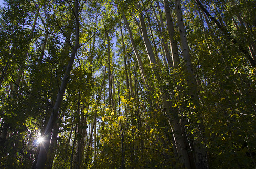 forest landscape colorado hiking aspen sanjuanmountains aspenforest nikon7000