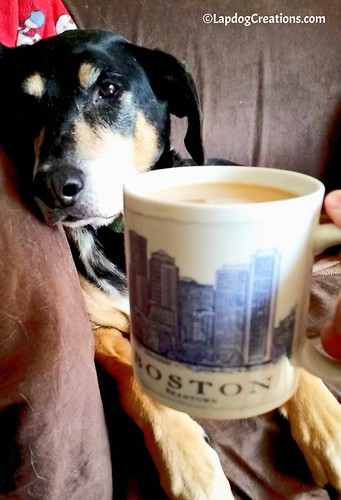 """Don't Talk To Mama Before Her Coffee"" - Teutul #BostonStrong #Coffee #HoundDog #LapdogCreations ©LapdogCreations"