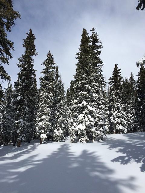 月, 2016-02-01 15:42 - 午後になって晴れ間が出たEnchanted Forest