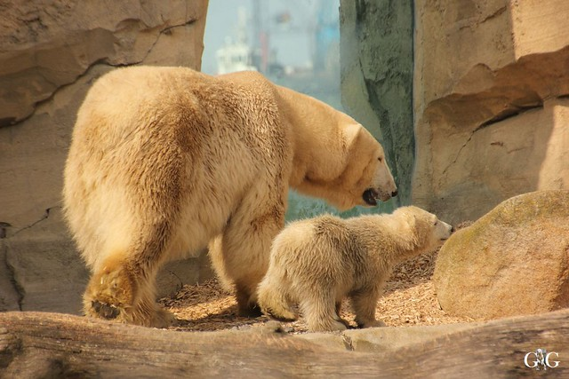 Zoo Bremerhaven 09.04.16 2.Teil20