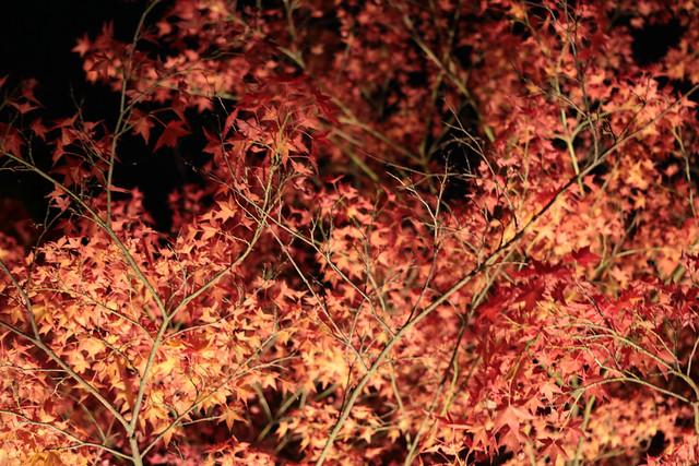 20141122-武奈ヶ岳&京都ライトアップ-0623.jpg