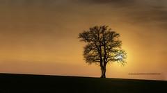 sunset - Photo of Frasnay-Reugny