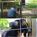 Goat pose by daveynin