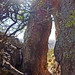 Trail Through Rock, Hills Above Zacatecas