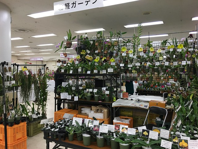 2016/01/07 サンシャインらん展 北軽ガーデン
