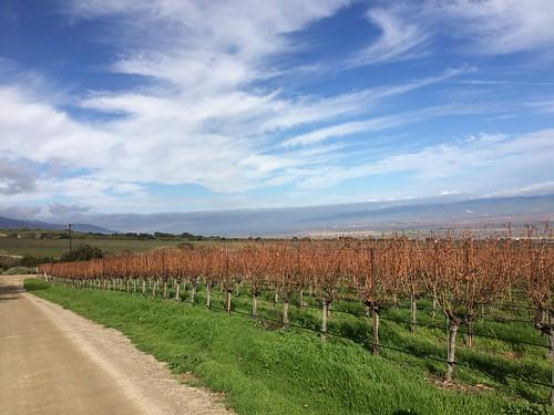 monterey vineyard centralcoast weinberg