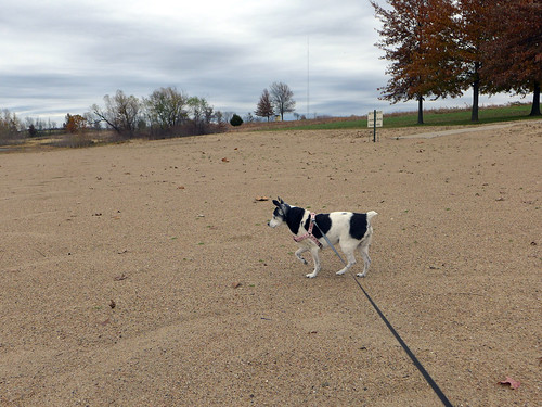2015-11-20 - Walking at Smithville Lake Beach - 0024 [flickr]