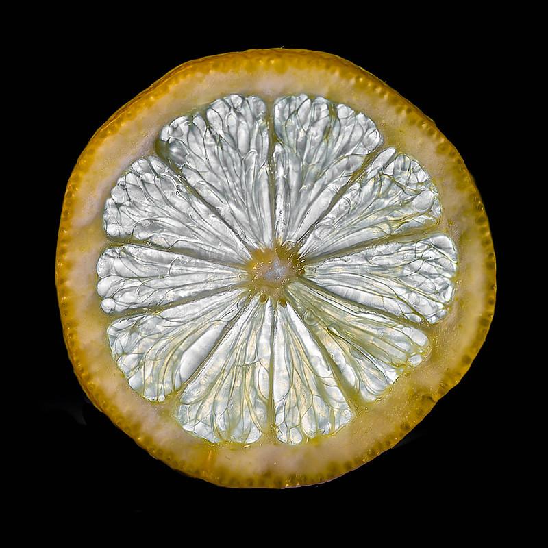 38-366 Lemon