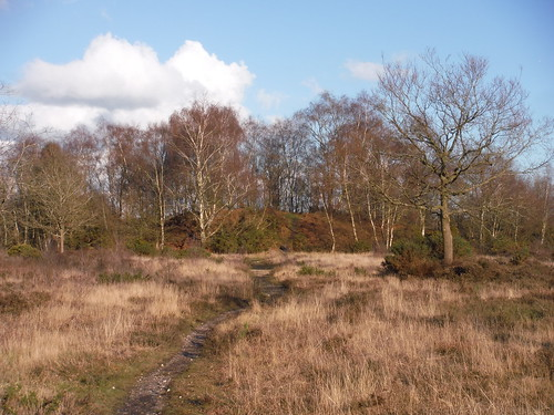 Wooded Hillock on Bucklebury Common