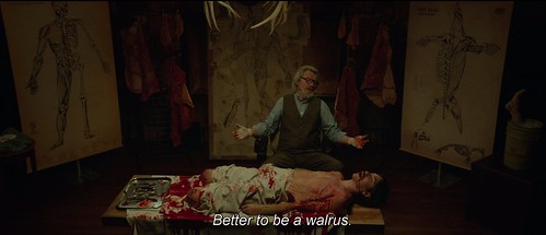 Better to be a walrus