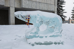 Fairbanks SAO - UAF Snowy Polar Bear