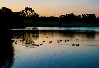 #95_IGP3351-Ducks_at_dusk