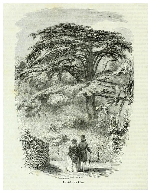 001-El cedro del Libano-Le jardin des plantes description et murs des mammifères de la Ménagerie..1863-  Boitard Pierre