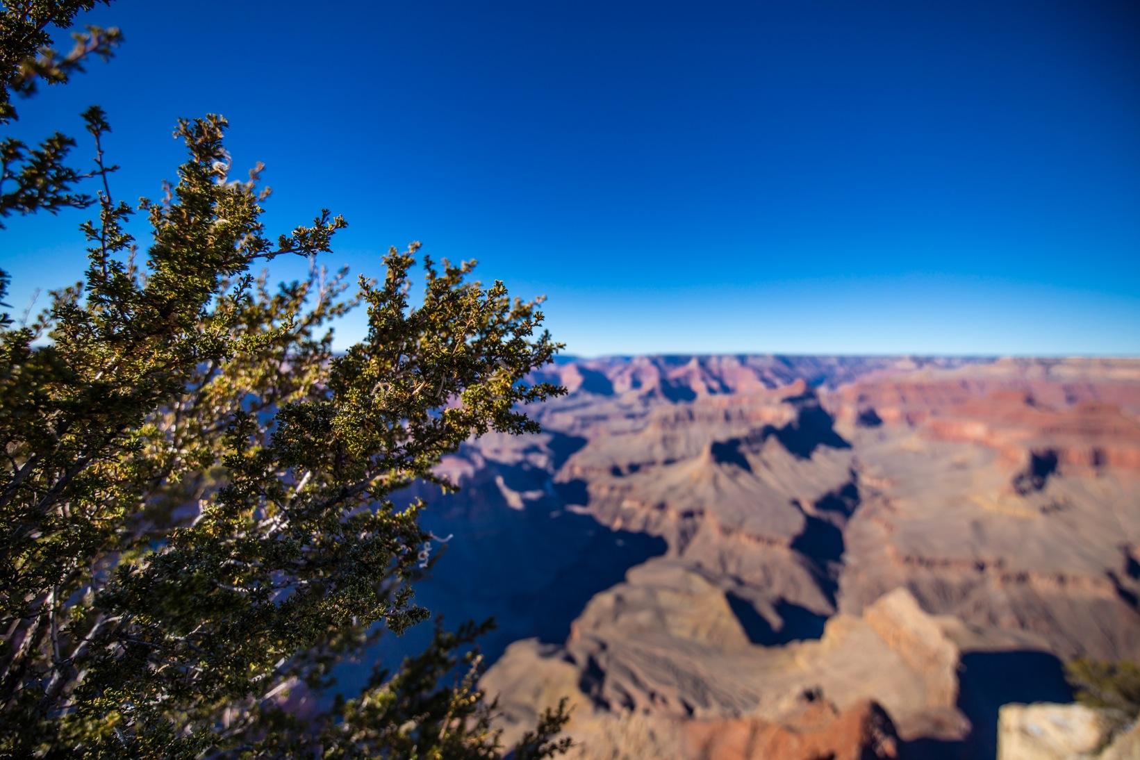 Grand Canyon 2016-1078
