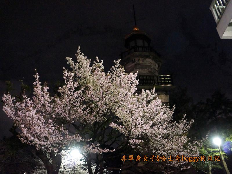 日本東京北之丸公園千鳥之淵賞夜櫻花12