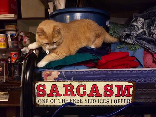 Sarcastic Pumpkin (May 2 2015)
