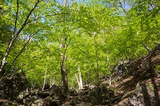 新緑シャワーの登山道