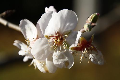 12 gennaio 2016 piante in fiore