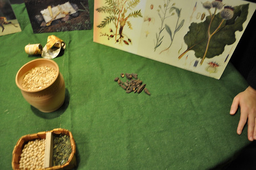Rotknölar från brudbröd och annan stenåldersmat