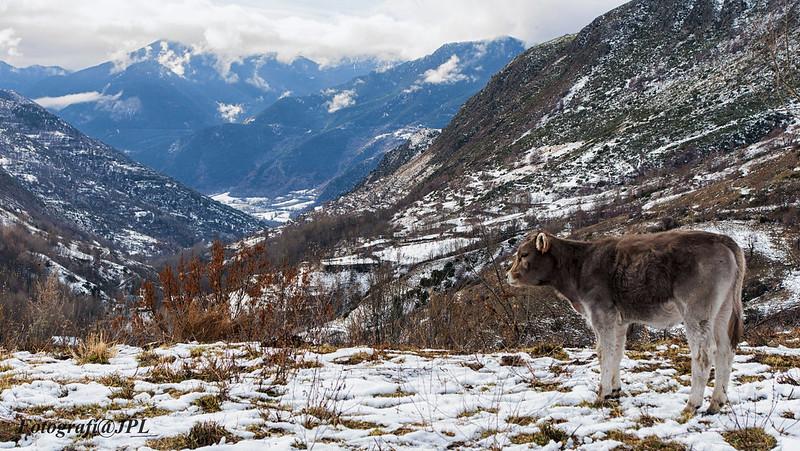 LA VALL d'ANEU (Pirineo Catalán). en Nuestros reportajes24073425799_20169671ac_c.jpg