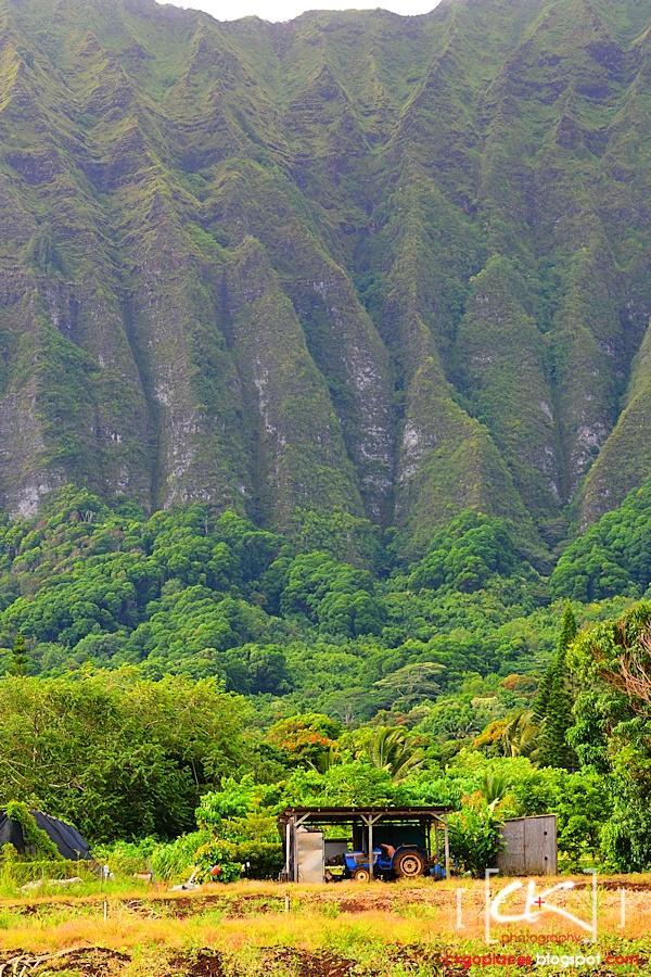 Hawaii_0231