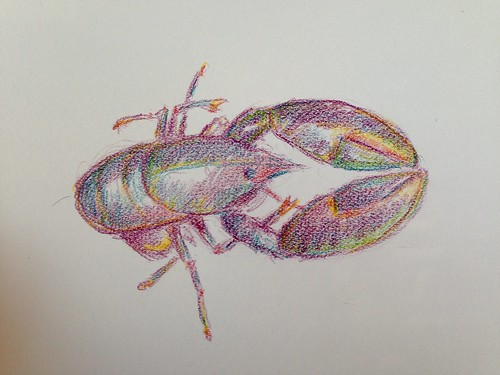 Lobster in color pencil