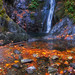 Golden Falls by ecstaticist - evanleeson.com