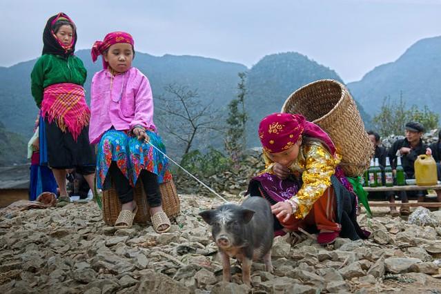 Vietnamese market - pig