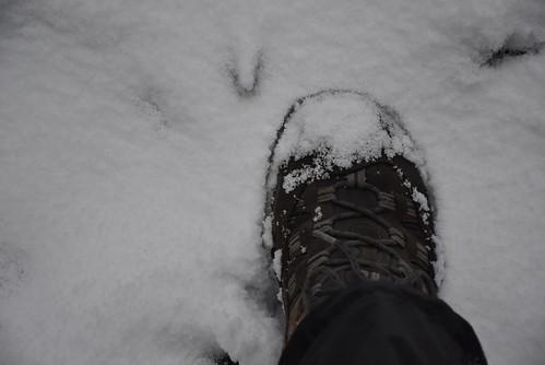 菁山路人車分道雪景