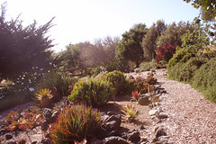 SLO Botanical Garden