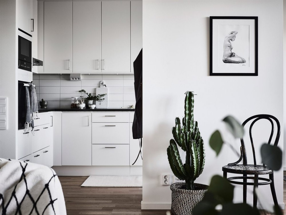Home Design Inspiration: Minimalist Homes with Indoor Plants, Cactus and Succulents