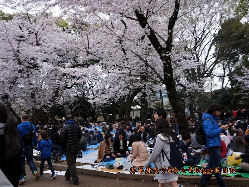 日本東京上野恩賜公園櫻花12