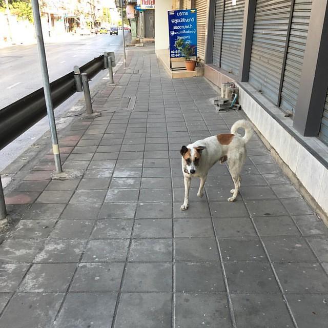 อยู่ดีๆ ก็มีหมาตัวนี้เดินตามมาส่ง หมาใครหายมั๊ย #lostdog #bangkok