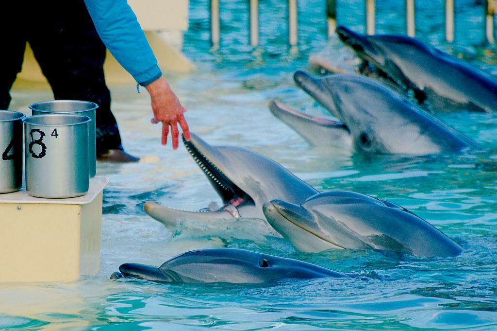 Dolphin_9