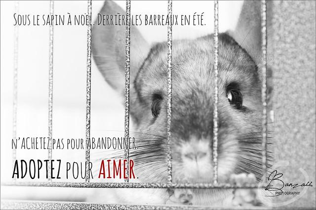 Affiches contre l'abandon et pour le respect de l'animal... 24418412836_6d038a098e_z