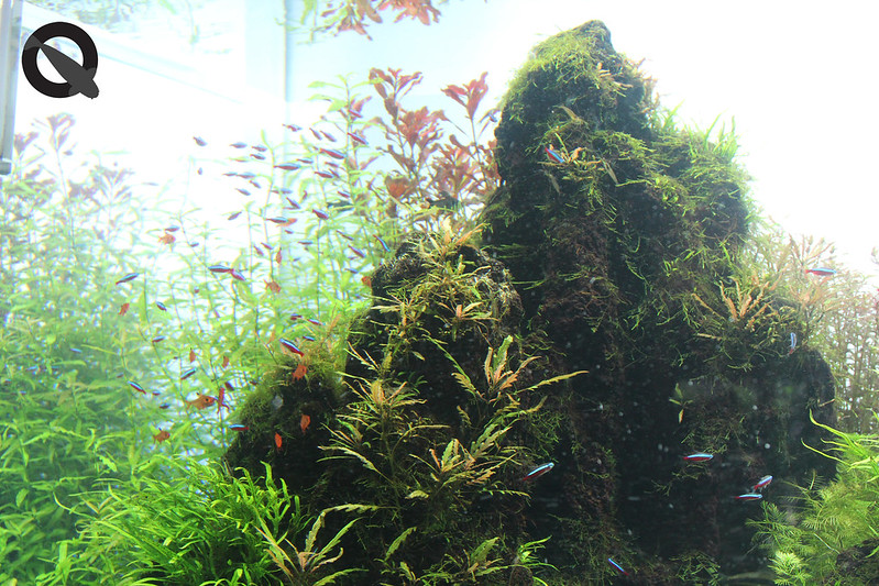 KQ Sumida Aquascape 1