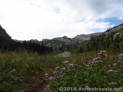 Wildflowers and cliffs under cloudy skies in Teton Canyon on the Alaska Basin Trail en route to the Stairway to Heaven, Jedediah Smith Wilderness and Grand Teton National Park, Wyoming