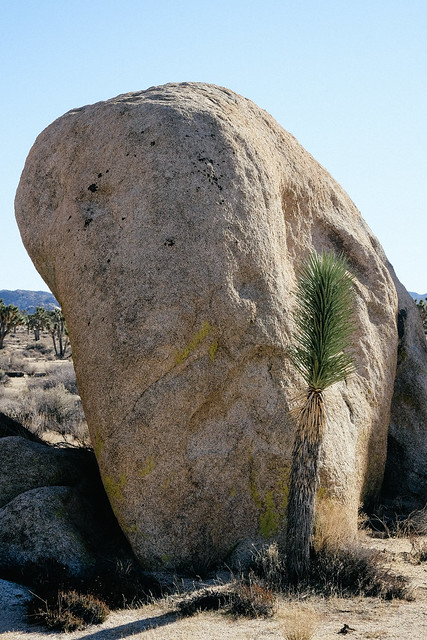 Tuukka13 - A Visit to Joshua Tree National Park, December 2015