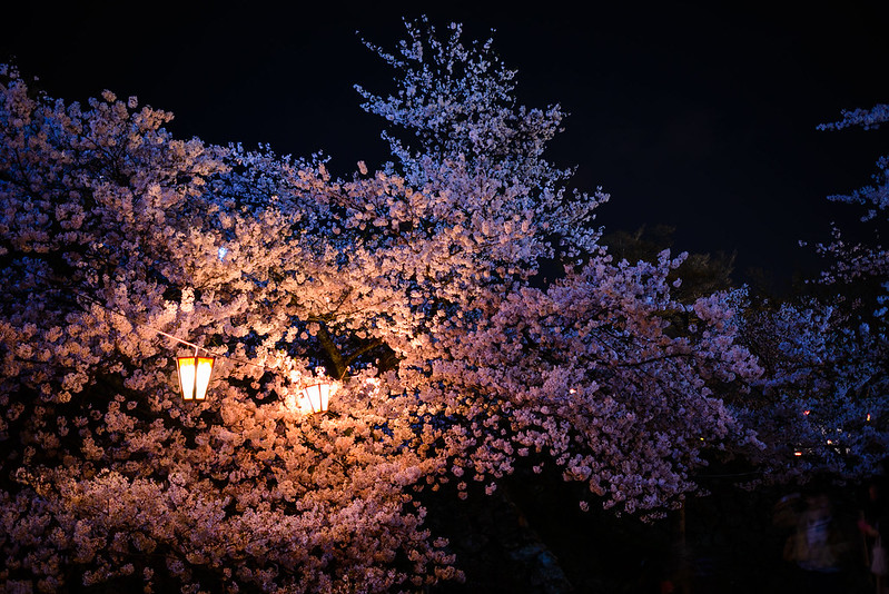 久松公園 2015-2