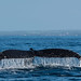 A Whale of a tale :) by Josiane .