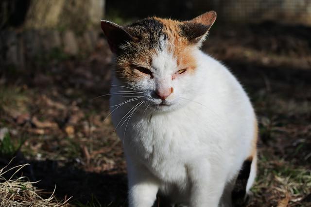 Stray cat 山の中の野良猫ちゃん