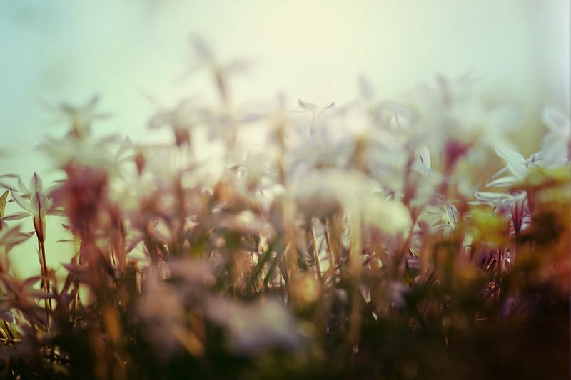 blur-dreamy-texture-texturepalace-37