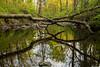 woodland2016-31.jpg