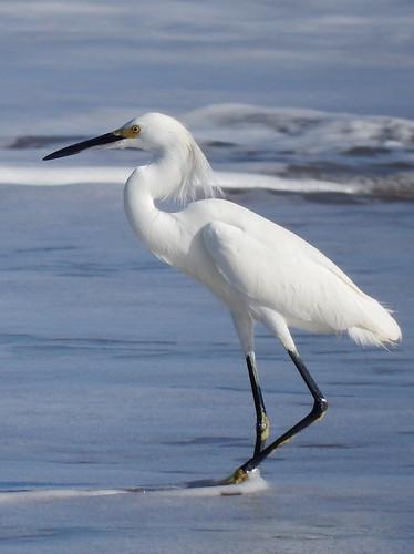 Lo de Marcos - egret