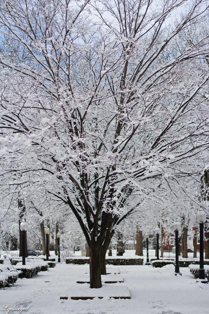 snow trees-13.jpg
