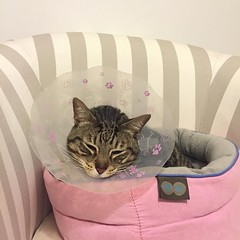 Sleepy kitty, back from the vet after a little surgery#poorkitty So glad she is going to be OK