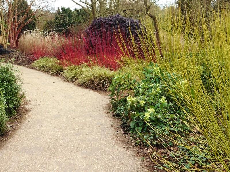 Coloured Grasses & Reeds